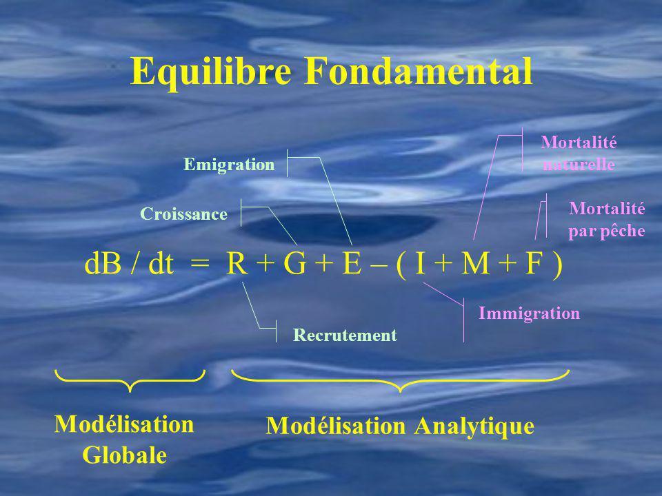 Equilibre Fondamental dB / dt = R + G + E – ( I + M + F ) Mortalité par pêche Mortalité naturelle Recrutement Croissance Emigration Immigration Modéli