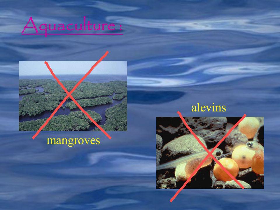 Aquaculture : mangroves alevins