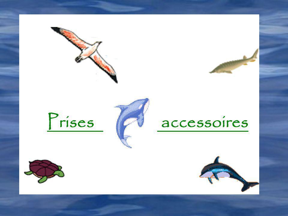 Prises accessoires