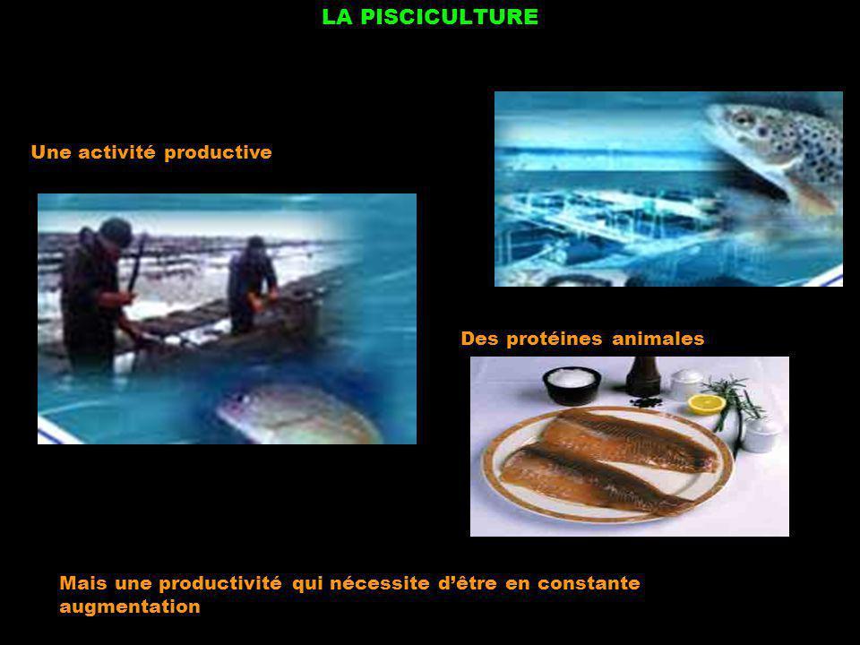 LA PISCICULTURE Des protéines animales Une activité productive Mais une productivité qui nécessite dêtre en constante augmentation