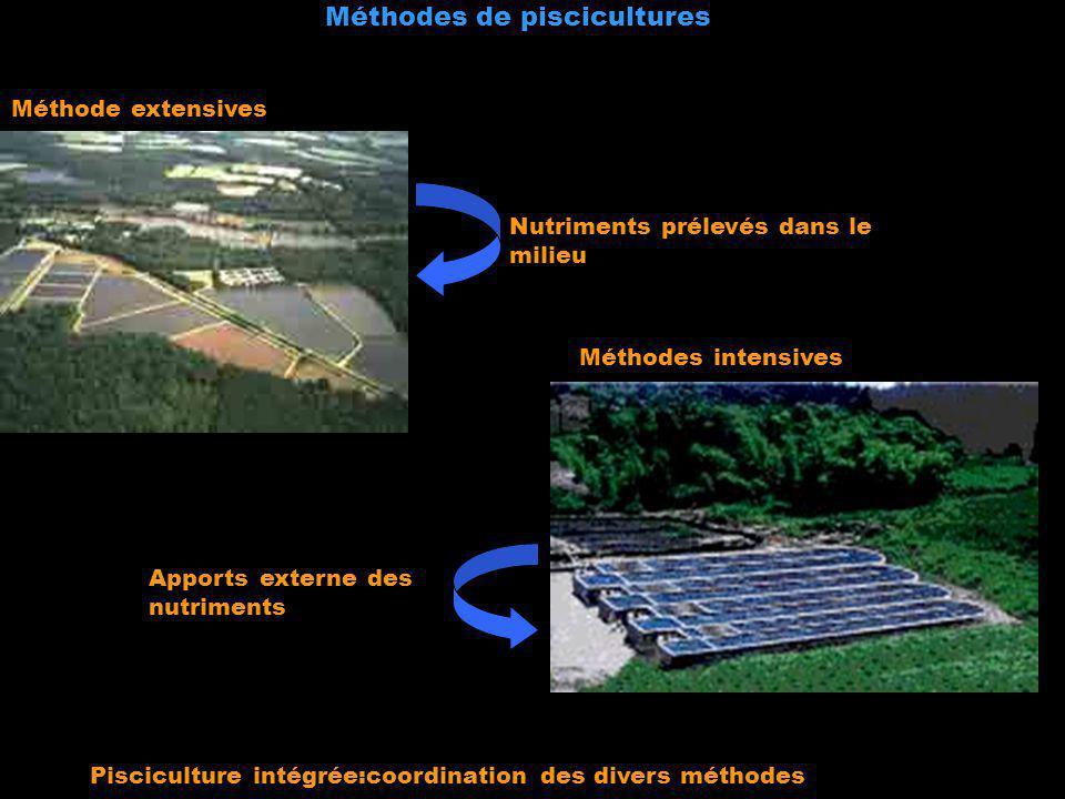 Méthode extensives Méthodes intensives Nutriments prélevés dans le milieu Apports externe des nutriments Méthodes de piscicultures Pisciculture intégr