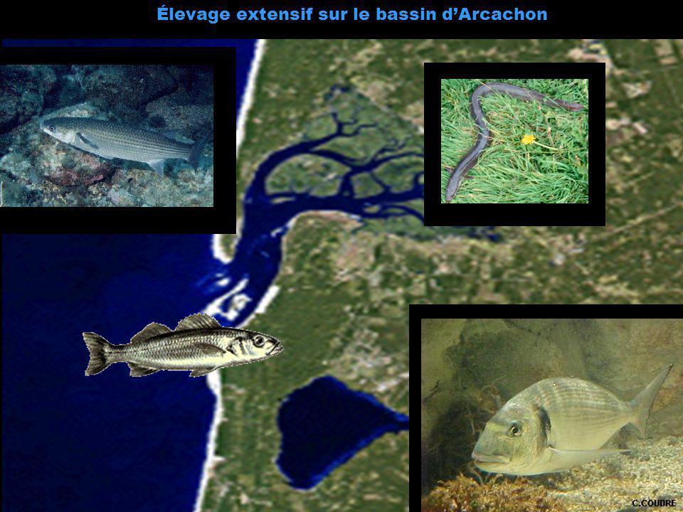 Élevage extensif sur le bassin dArcachon