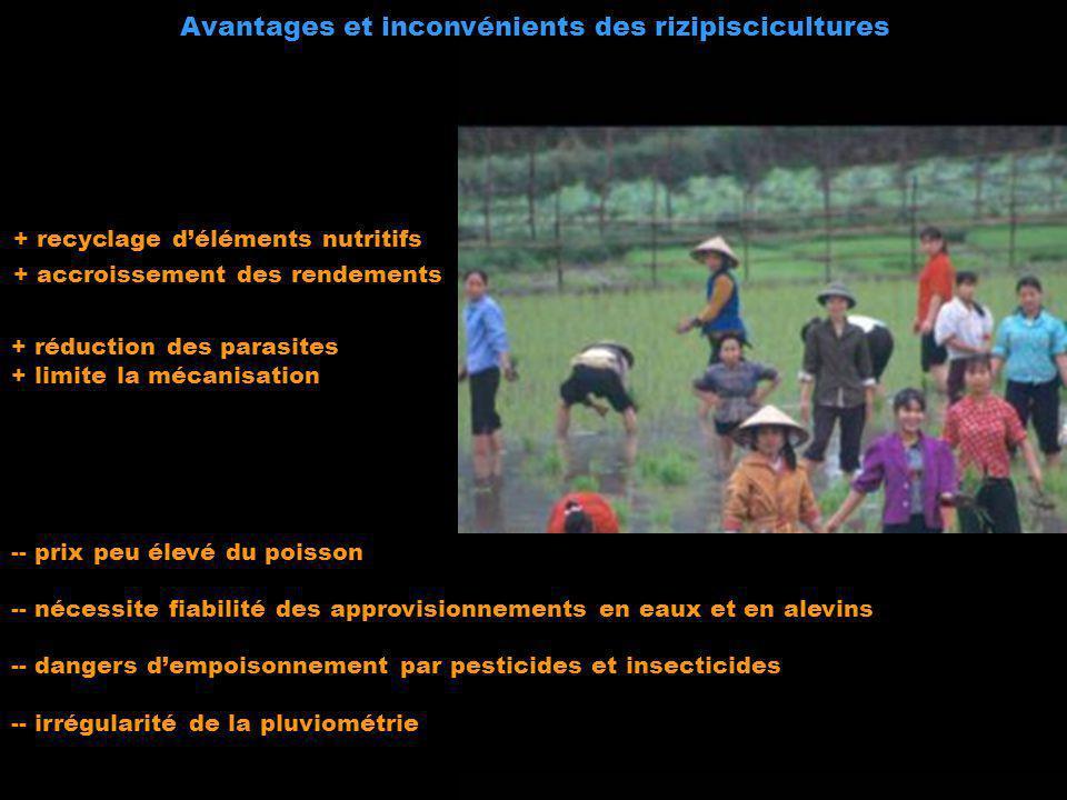 - + recyclage déléments nutritifs + accroissement des rendements + réduction des parasites + limite la mécanisation -- prix peu élevé du poisson -- né