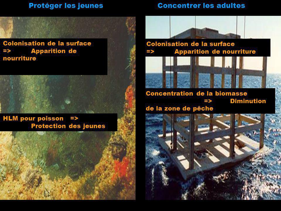Protéger les jeunesConcentrer les adultes HLM pour poisson => Protection des jeunes Colonisation de la surface => Apparition de nourriture Concentrati