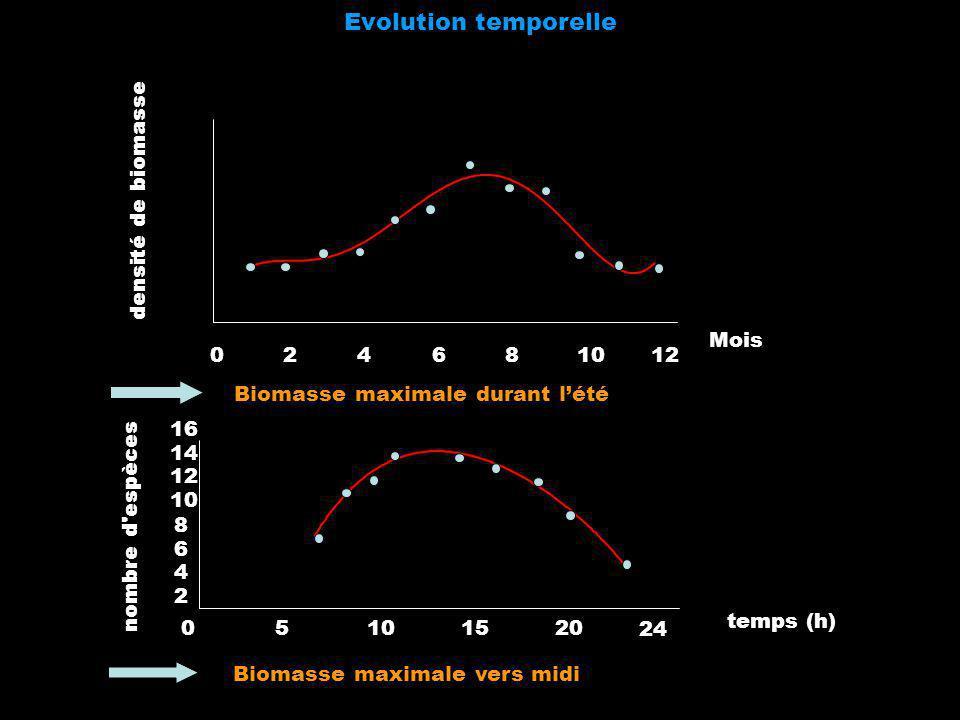 Evolution temporelle Biomasse maximale durant lété Biomasse maximale vers midi 024681012 Mois densité de biomasse 24 temps (h) nombre d'espèces 2 4 6