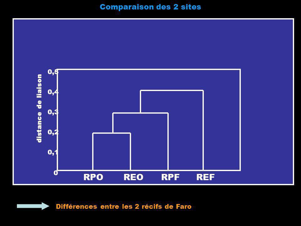 Comparaison des 2 sites 0 0,1 0,2 0,3 0,4 0,5 distance de liaison RPOREORPFREF Différences entre les 2 récifs de Faro