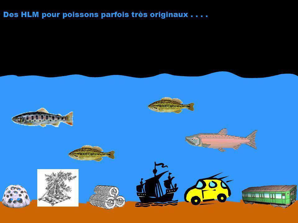 Des HLM pour poissons parfois très originaux....