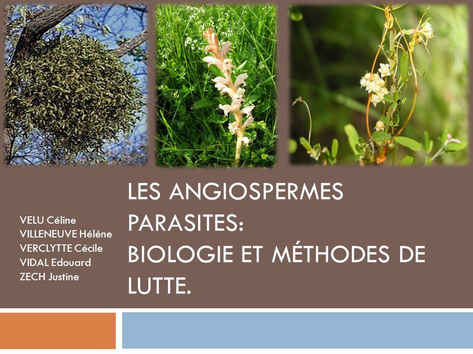 Plan I.Introduction II. Cycles biologiques de quelques Angiospermes parasites.