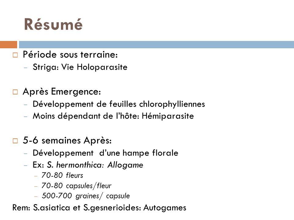 Période sous terraine: – Striga: Vie Holoparasite Après Emergence: – Développement de feuilles chlorophylliennes – Moins dépendant de lhôte: Hémiparas