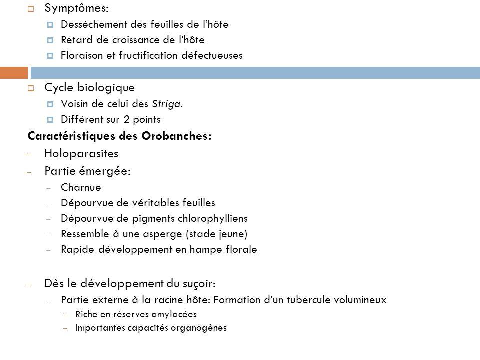 Symptômes: Dessèchement des feuilles de lhôte Retard de croissance de lhôte Floraison et fructification défectueuses Cycle biologique Voisin de celui