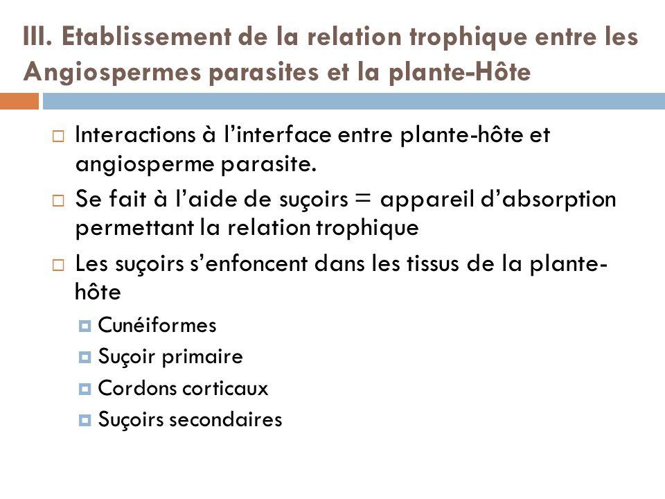 III. Etablissement de la relation trophique entre les Angiospermes parasites et la plante-Hôte Interactions à linterface entre plante-hôte et angiospe