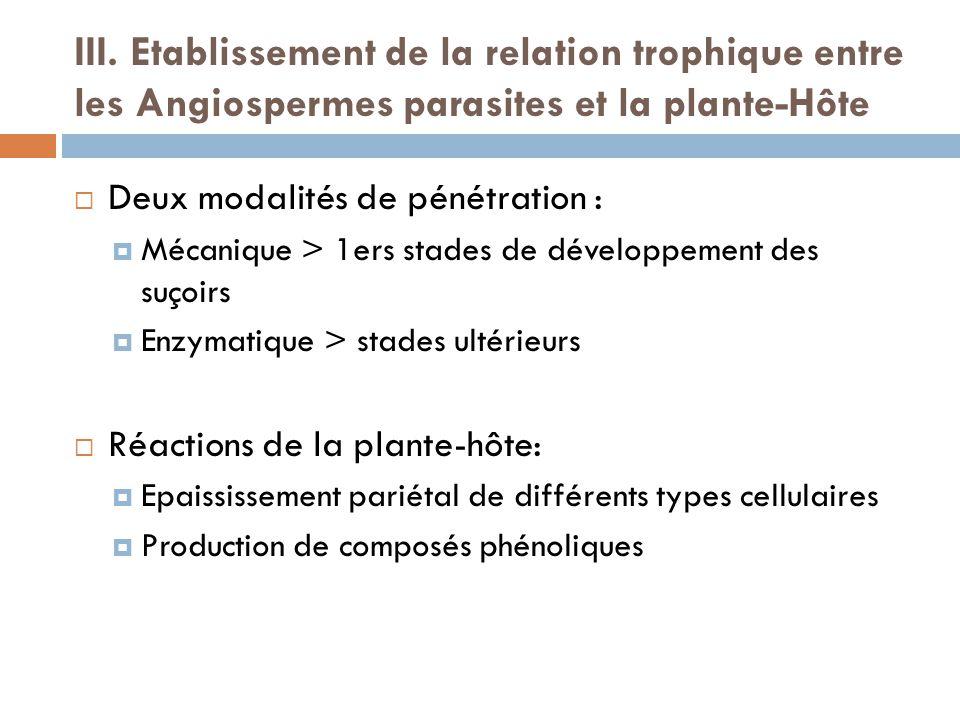 III. Etablissement de la relation trophique entre les Angiospermes parasites et la plante-Hôte Deux modalités de pénétration : Mécanique > 1ers stades