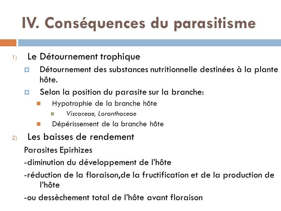 IV. Conséquences du parasitisme 1) Le Détournement trophique Détournement des substances nutritionnelle destinées à la plante hôte. Selon la position