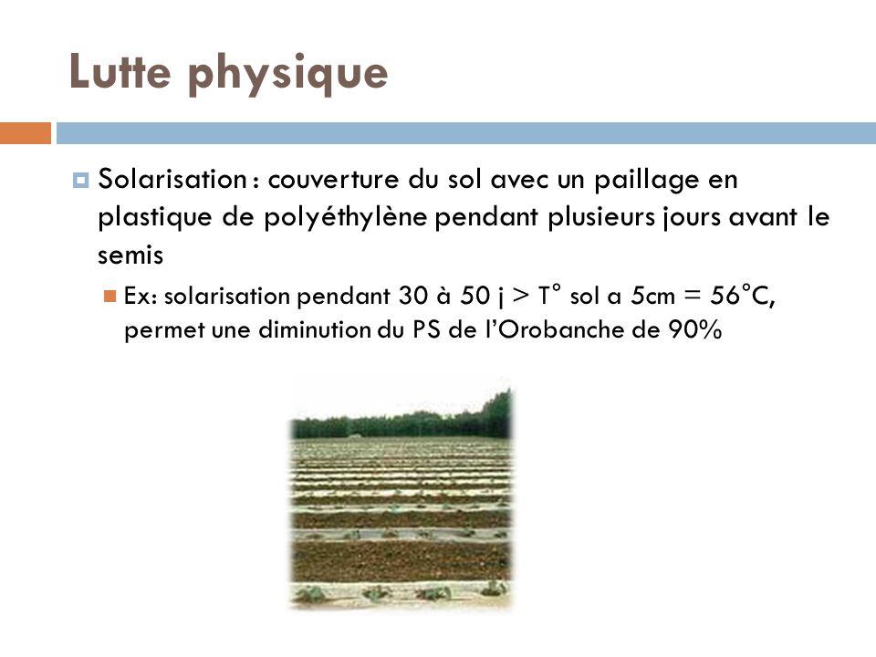 Lutte physique Solarisation : couverture du sol avec un paillage en plastique de polyéthylène pendant plusieurs jours avant le semis Ex: solarisation