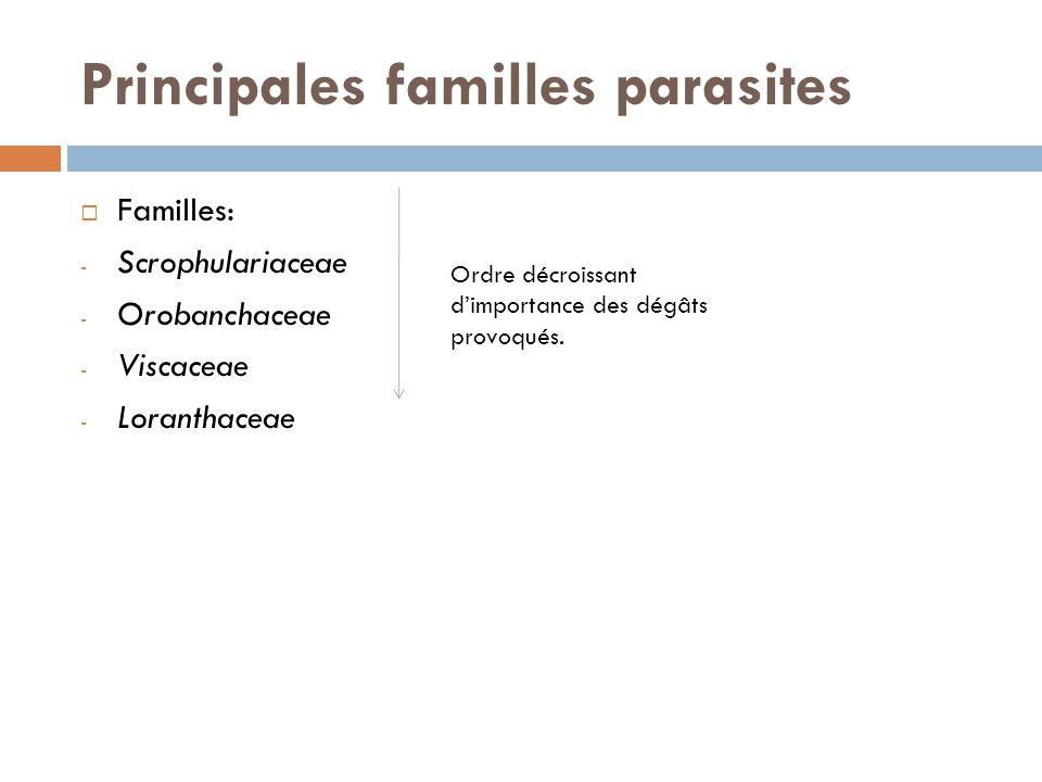 Principales familles parasites Familles: - Scrophulariaceae - Orobanchaceae - Viscaceae - Loranthaceae Ordre décroissant dimportance des dégâts provoq