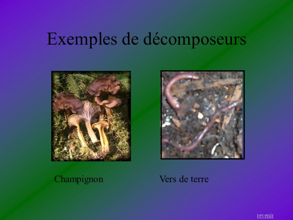 Exemples de décomposeurs revenir Vers de terreChampignon