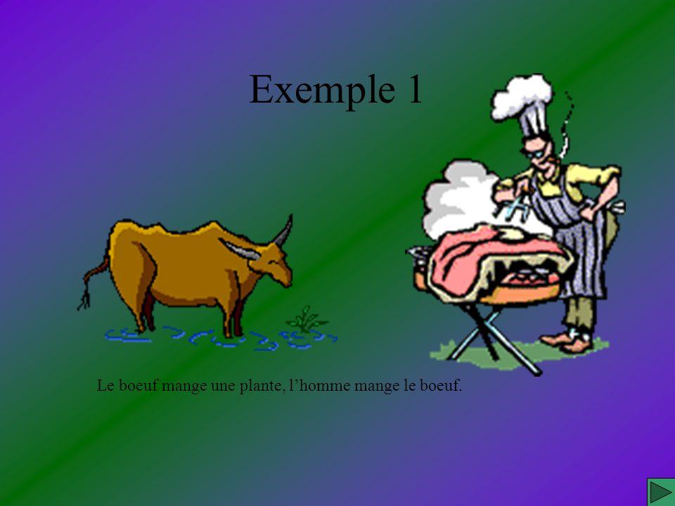 Le boeuf mange une plante, lhomme mange le boeuf. Exemple 1