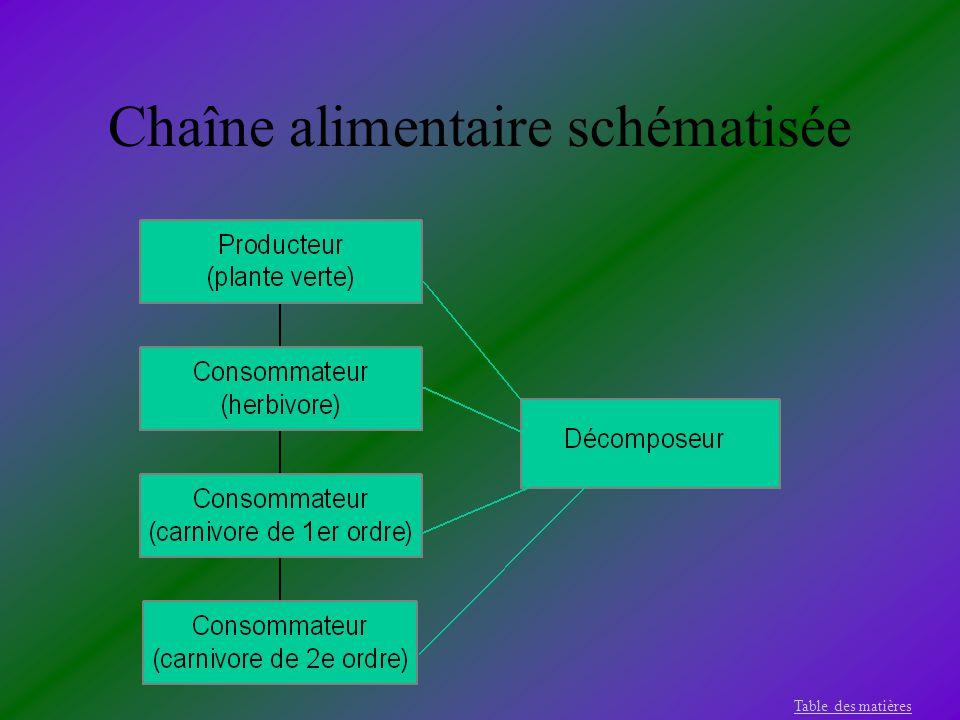 Chaîne alimentaire schématisée Table des matières