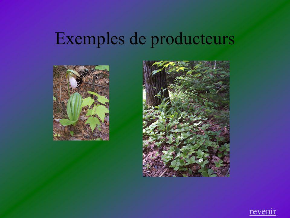 Exemples de producteurs revenir
