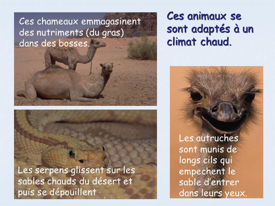 Ces animaux se sont adaptés aux climats froids.