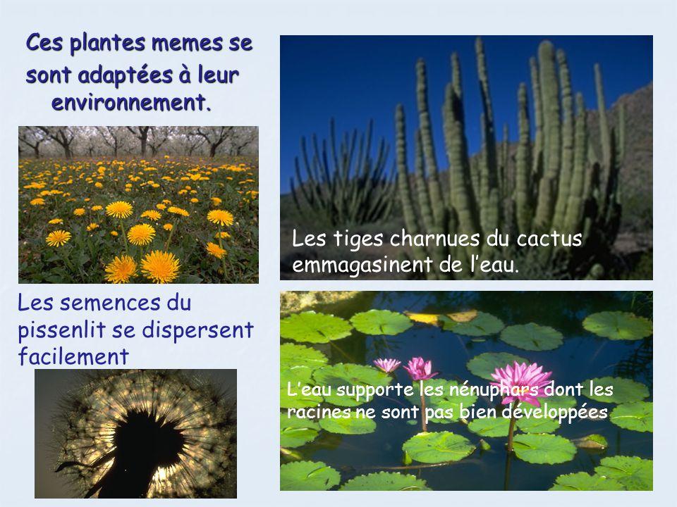 Les animaux et les plantes sentraident Les plantes les animaux dépendent les uns sur les autres pour bien des choses.