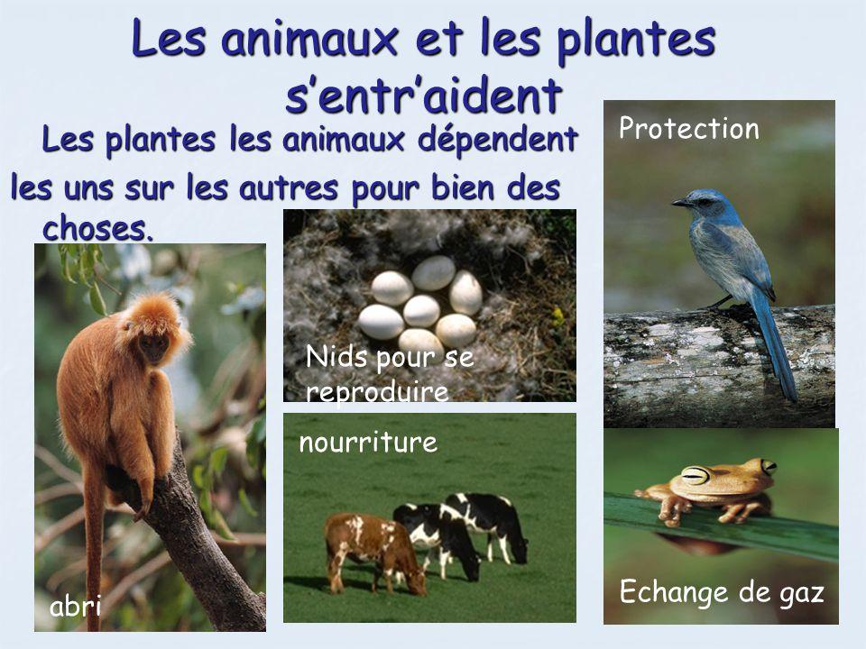 Les animaux et les plantes sentraident Les plantes les animaux dépendent les uns sur les autres pour bien des choses. nourriture Nids pour se reprodui