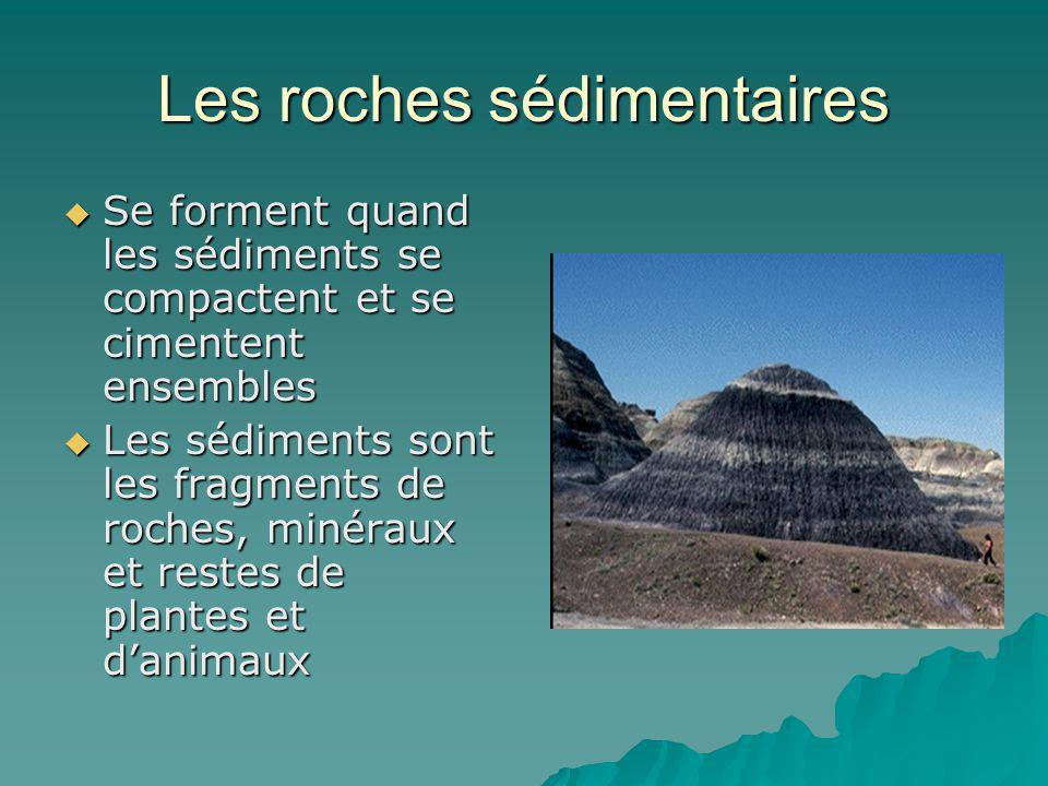 Les roches sédimentaires Se forment quand les sédiments se compactent et se cimentent ensembles Se forment quand les sédiments se compactent et se cim