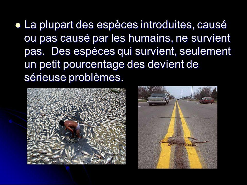 La plupart des espèces introduites, causé ou pas causé par les humains, ne survient pas. Des espèces qui survient, seulement un petit pourcentage des