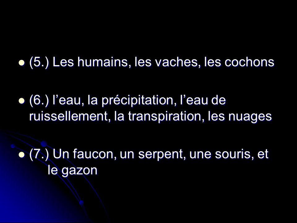 (5.) Les humains, les vaches, les cochons (5.) Les humains, les vaches, les cochons (6.) leau, la précipitation, leau de ruissellement, la transpirati