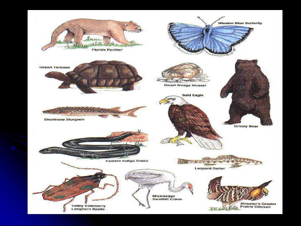 Une espèce disparue : un organisme qui nexiste nulle part dans le monde.