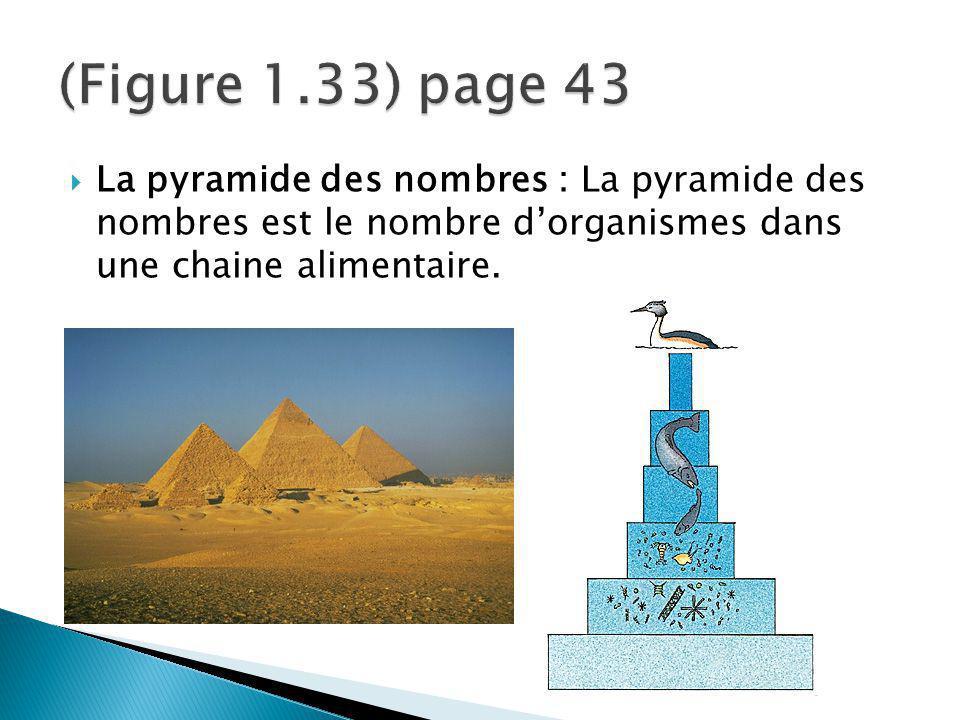 La pyramide des nombres : La pyramide des nombres est le nombre dorganismes dans une chaine alimentaire.