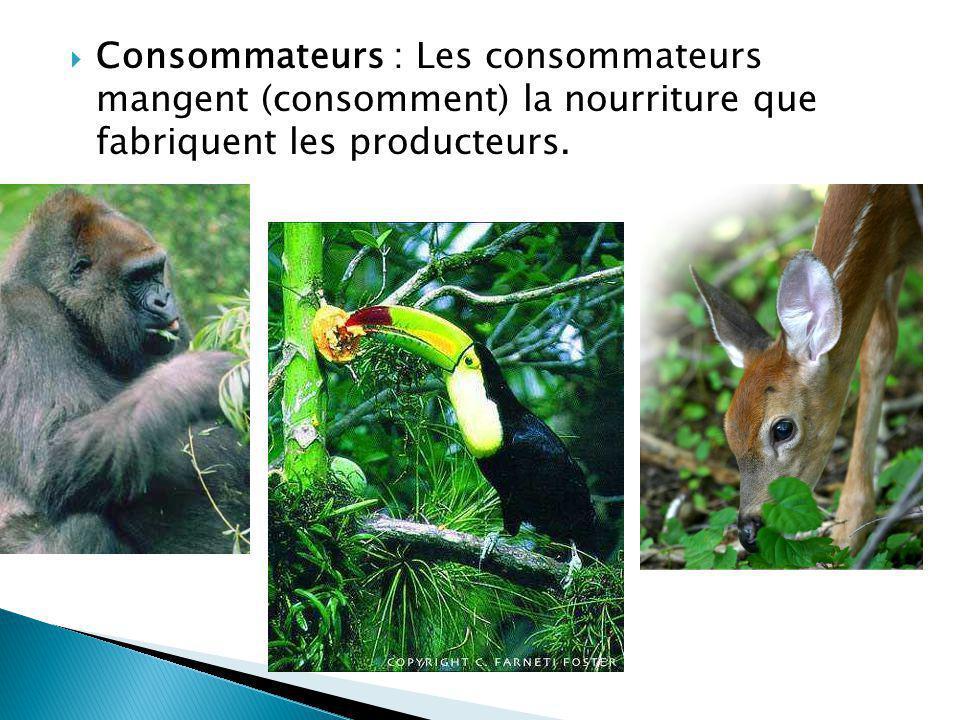 Les herbivores : Les organismes qui se nourrissent des producteurs.