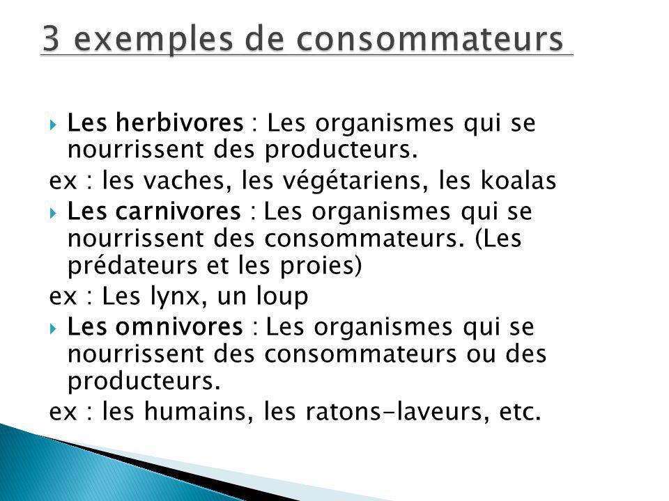 Les herbivores : Les organismes qui se nourrissent des producteurs. ex : les vaches, les végétariens, les koalas Les carnivores : Les organismes qui s