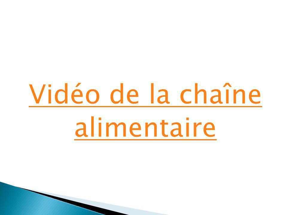 Vidéo de la chaîne alimentaire