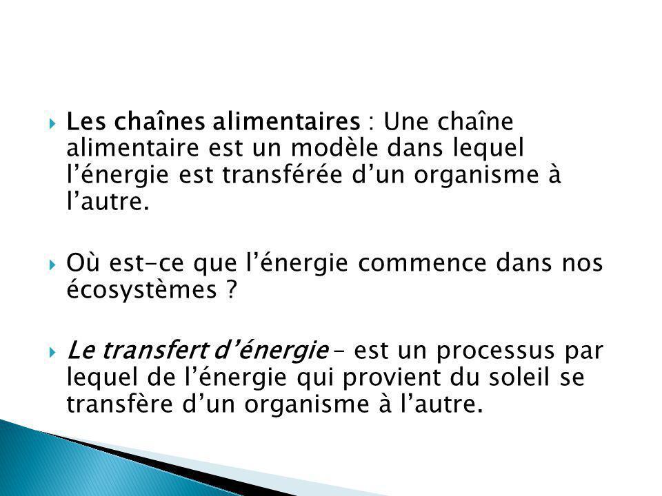 Les chaînes alimentaires : Une chaîne alimentaire est un modèle dans lequel lénergie est transférée dun organisme à lautre. Où est-ce que lénergie com