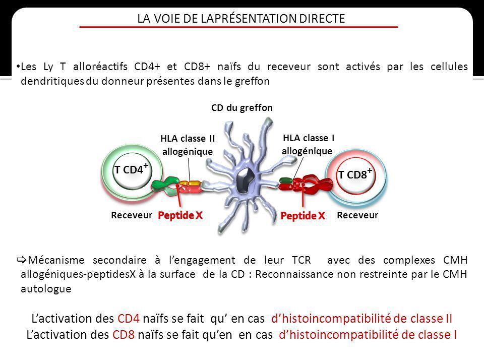 LA VOIE DE LAPRÉSENTATION DIRECTE Les Ly T alloréactifs CD4+ et CD8+ naïfs du receveur sont activés par les cellules dendritiques du donneur présentes