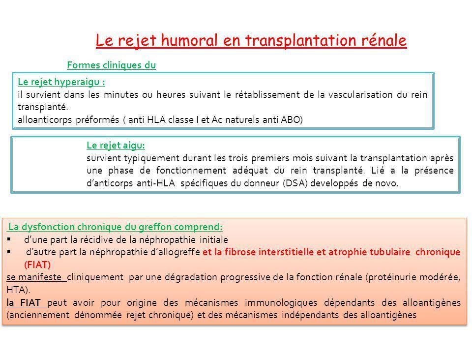Formes cliniques du rejet humoral La dysfonction chronique du greffon comprend: dune part la récidive de la néphropathie initiale dautre part la néphr