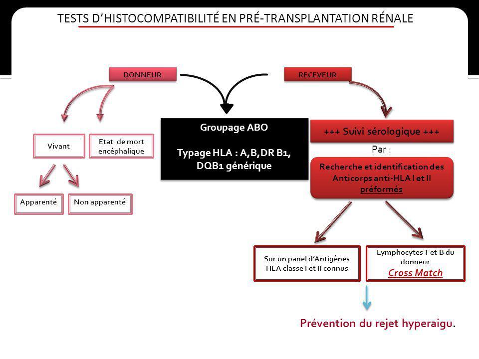 TESTS DHISTOCOMPATIBILITÉ EN PRÉ-TRANSPLANTATION RÉNALE DONNEUR RECEVEUR Groupage ABO Typage HLA : A,B,DR B1, DQB1 générique Groupage ABO Typage HLA :
