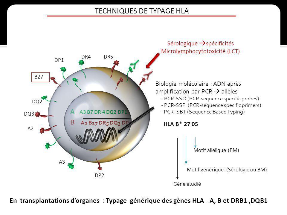 TECHNIQUES DE TYPAGE HLA B A2 B27 DR5 DQ3 DP2 A A3 B7 DR 4 DQ2 DP1 A3 A2 DR5DR4 DQ2 DP1 B27 DQ3 DP2 Sérologique spécificités Microlymphocytotoxicité (