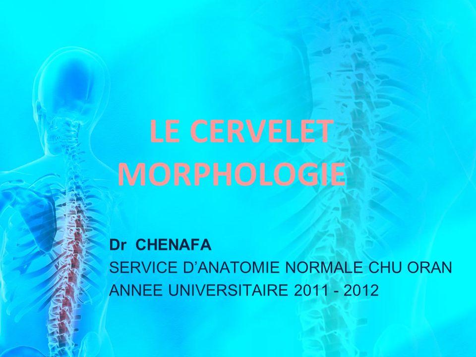 LE CERVELET MORPHOLOGIE Dr CHENAFA SERVICE DANATOMIE NORMALE CHU ORAN ANNEE UNIVERSITAIRE 2011 - 2012