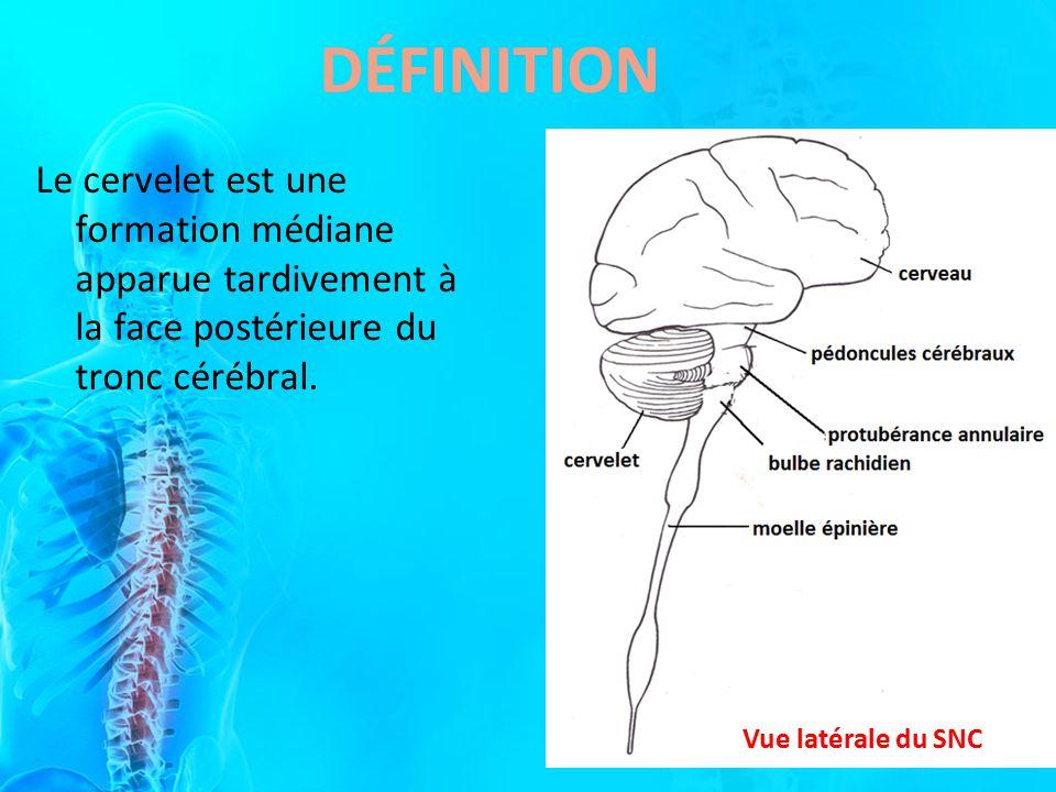 Le cervelet est une formation médiane apparue tardivement à la face postérieure du tronc cérébral. DÉFINITION Vue latérale du SNC