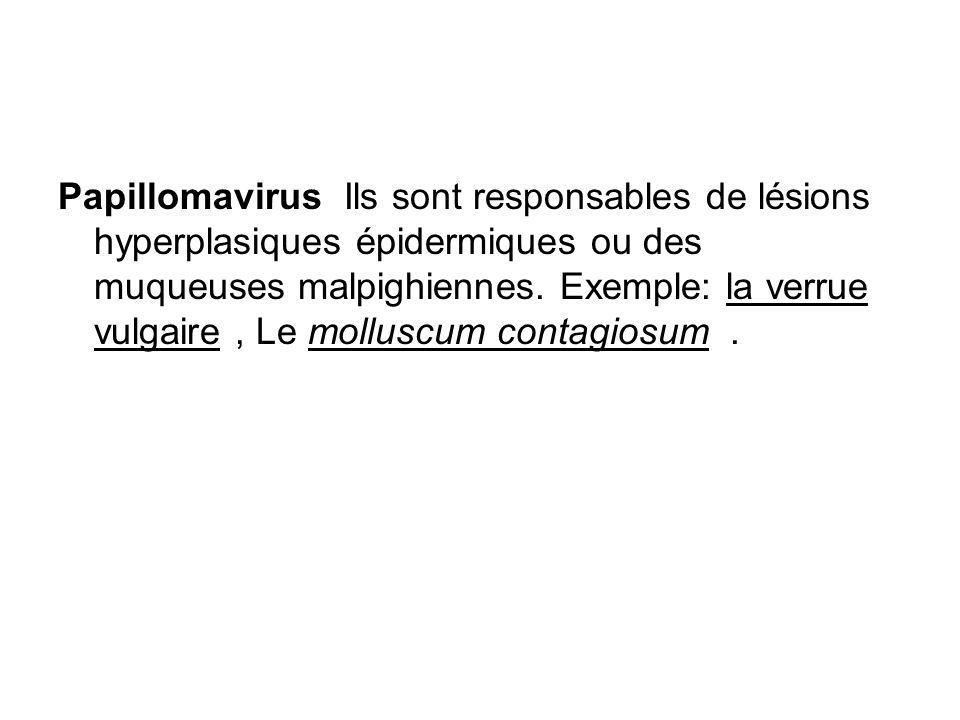 Papillomavirus Ils sont responsables de lésions hyperplasiques épidermiques ou des muqueuses malpighiennes. Exemple: la verrue vulgaire, Le molluscum