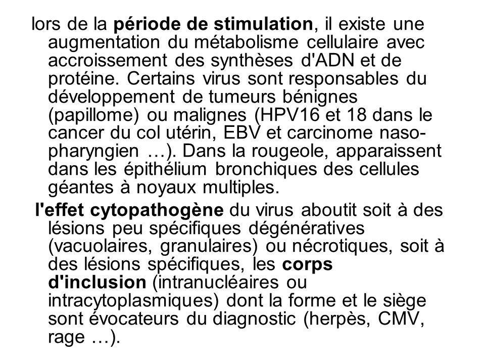 Lexamen anatomopathologique nest quassez rarement réalisé à des fins diagnostiques mais principalement pour évaluer le retentissement tissulaire de linflammation virale à valeur pronostique (lésions intra-épithéliales du col utérin à papillomavirus oncogène) et pour la prise en charge thérapeutique (traitements antiviraux de lhépatite C).