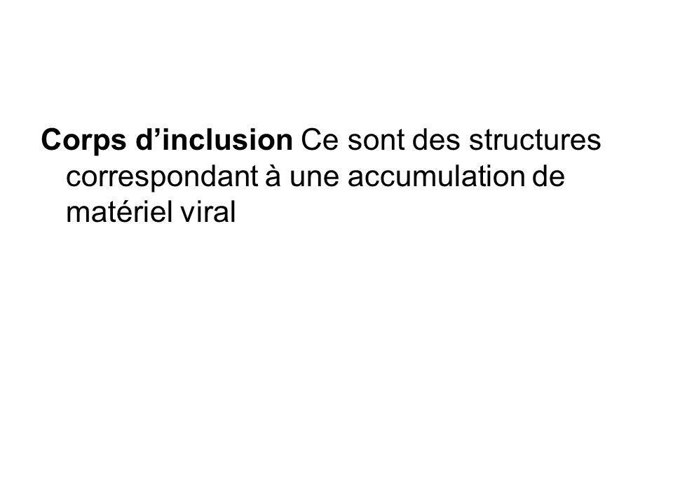 Corps dinclusion Ce sont des structures correspondant à une accumulation de matériel viral