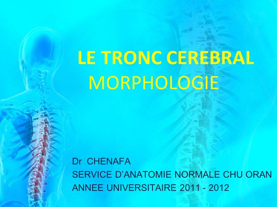 Dr CHENAFA SERVICE DANATOMIE NORMALE CHU ORAN ANNEE UNIVERSITAIRE 2011 - 2012 LE TRONC CEREBRAL MORPHOLOGIE