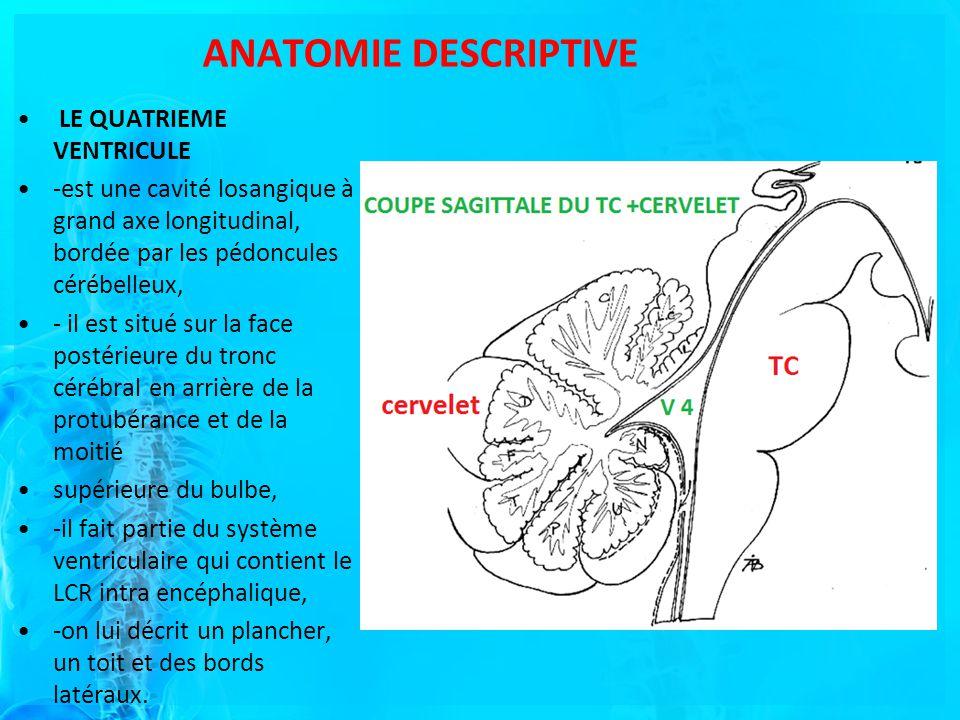 ANATOMIE DESCRIPTIVE LE QUATRIEME VENTRICULE -est une cavité losangique à grand axe longitudinal, bordée par les pédoncules cérébelleux, - il est situé sur la face postérieure du tronc cérébral en arrière de la protubérance et de la moitié supérieure du bulbe, -il fait partie du système ventriculaire qui contient le LCR intra encéphalique, -on lui décrit un plancher, un toit et des bords latéraux.