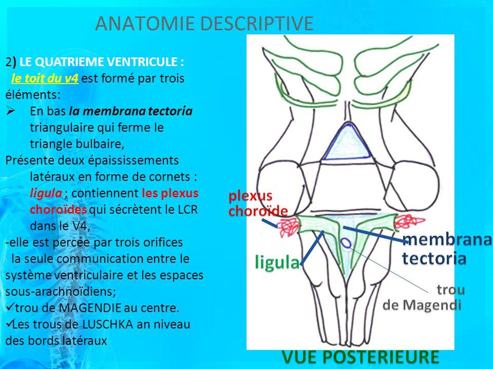 ANATOMIE DESCRIPTIVE 2) LE QUATRIEME VENTRICULE : le toit du v4 est formé par trois éléments: En bas la membrana tectoria triangulaire qui ferme le triangle bulbaire, Présente deux épaississements latéraux en forme de cornets : ligula ; contiennent les plexus choroïdes qui sécrètent le LCR dans le V4, -elle est percée par trois orifices la seule communication entre le système ventriculaire et les espaces sous-arachnoïdiens; trou de MAGENDIE au centre.
