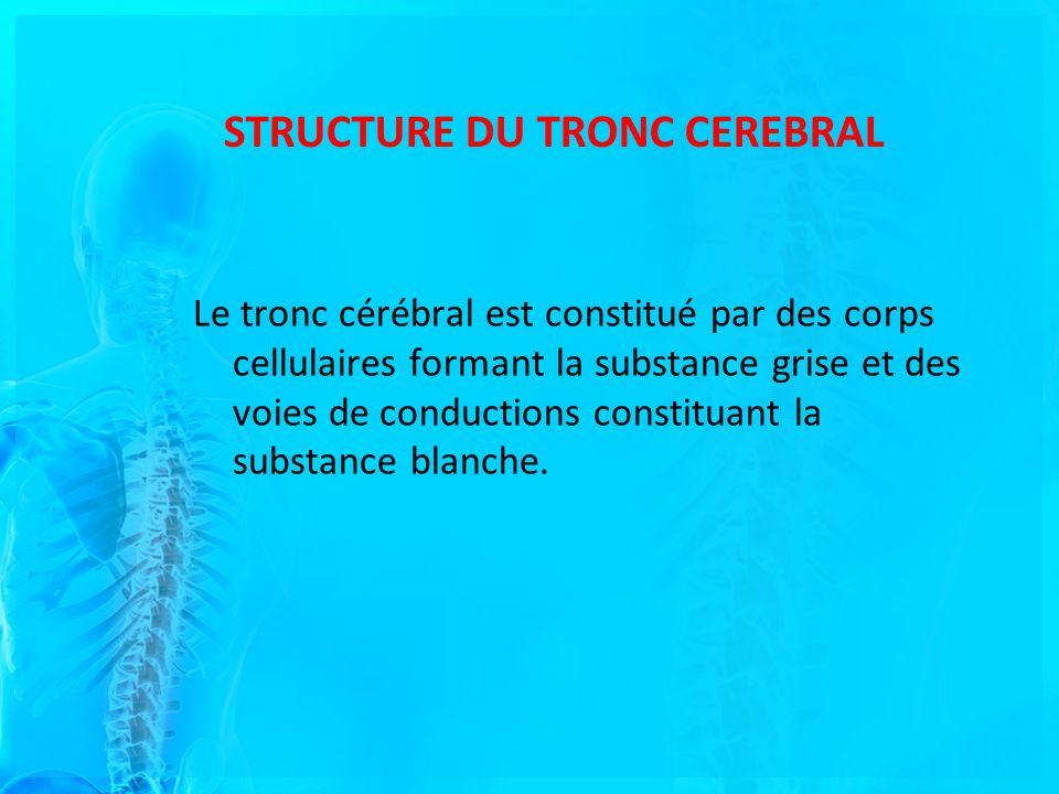 STRUCTURE DU TRONC CEREBRAL Le tronc cérébral est constitué par des corps cellulaires formant la substance grise et des voies de conductions constituant la substance blanche.