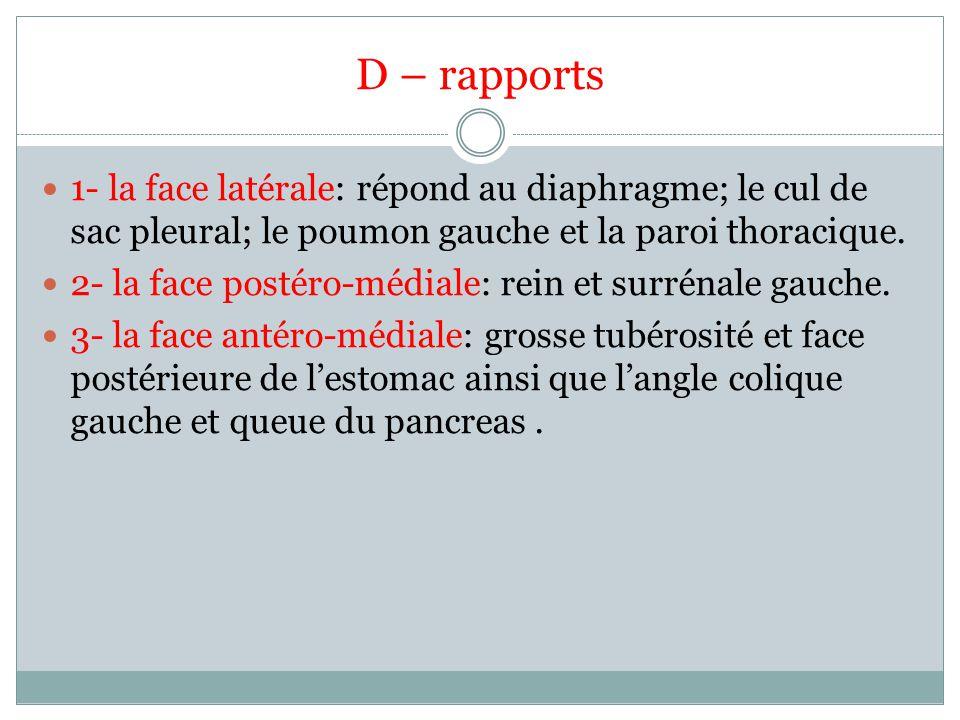 D – rapports 1- la face latérale: répond au diaphragme; le cul de sac pleural; le poumon gauche et la paroi thoracique. 2- la face postéro-médiale: re