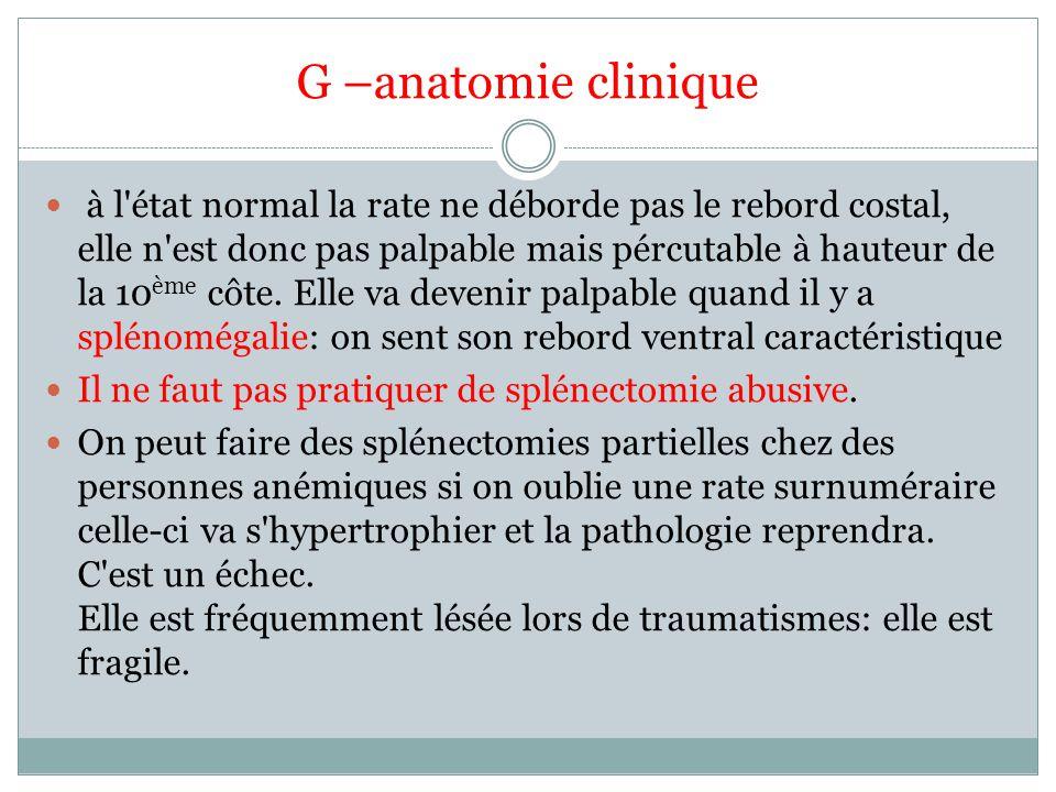 G –anatomie clinique à l état normal la rate ne déborde pas le rebord costal, elle n est donc pas palpable mais pércutable à hauteur de la 10 ème côte.